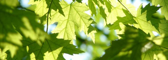 как смешать зеленый