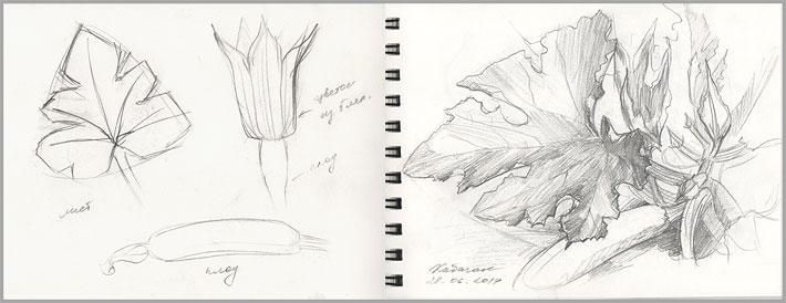 идеи для скетчбука: изучение растений