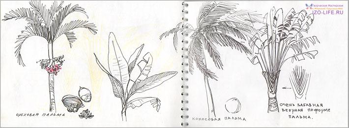 идеи для скетчбука: ботаника