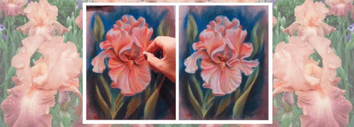 как нарисовать цветок ириса пастелью