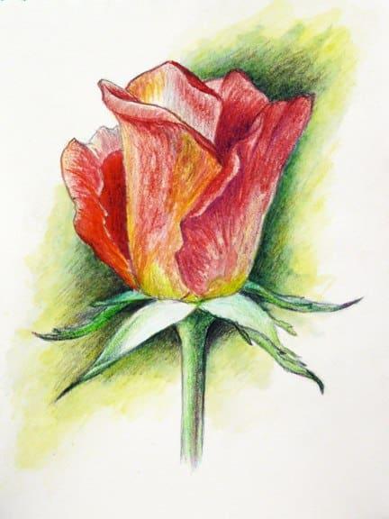 как нарисовать розу акварельными карандашами