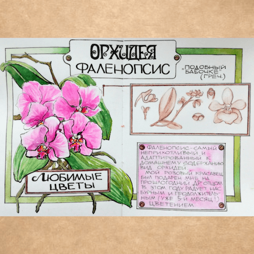 зарисовки растений, зарисовки цветов, скетчбук
