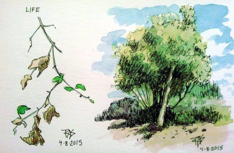 летние зарисовки