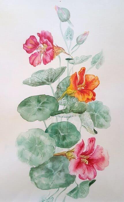 ботаническая живопись. акварель