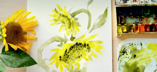 sunflowerM