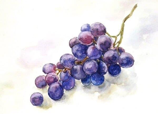рисование акварелью винограда