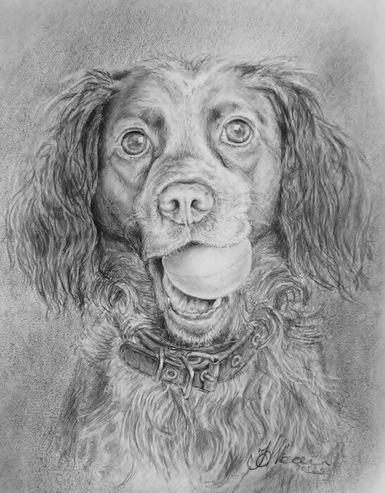 портрет собаки, карандаш, Наталья Жан