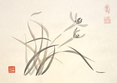 Цветок дикой орхидеи.
