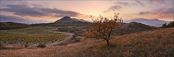 600px-Степи,_виноградники_и_горы_Коктебеля
