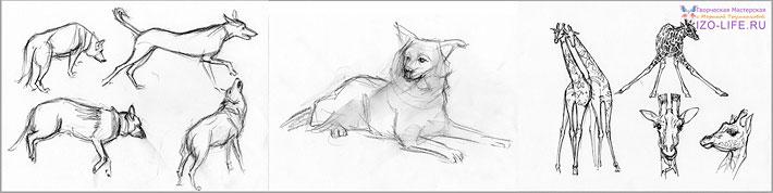 идеи скетчбукинга, зарисовки животных