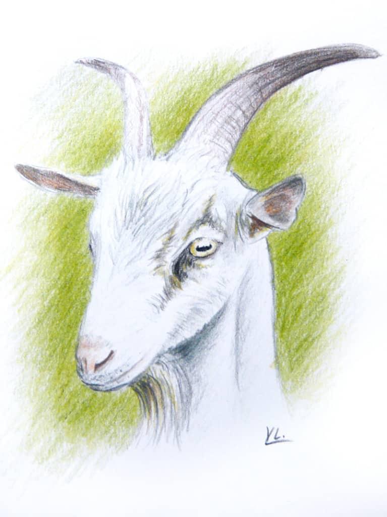 уроки рисования цветными карандашами: коза