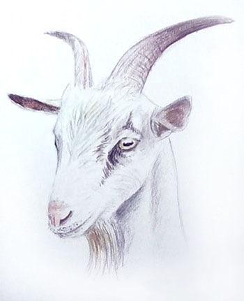 koza4