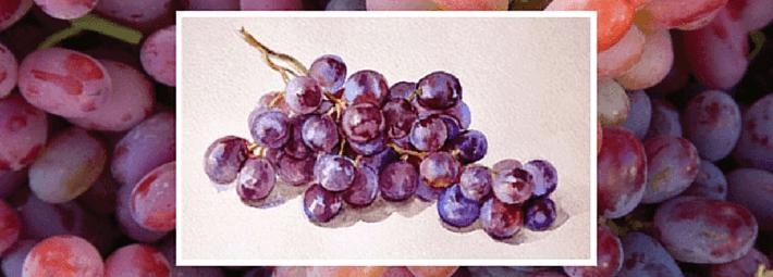 виноград, акварель, Марина Трушникова